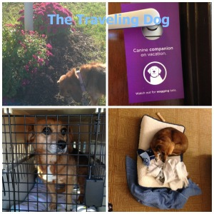 Travel Dog Collage